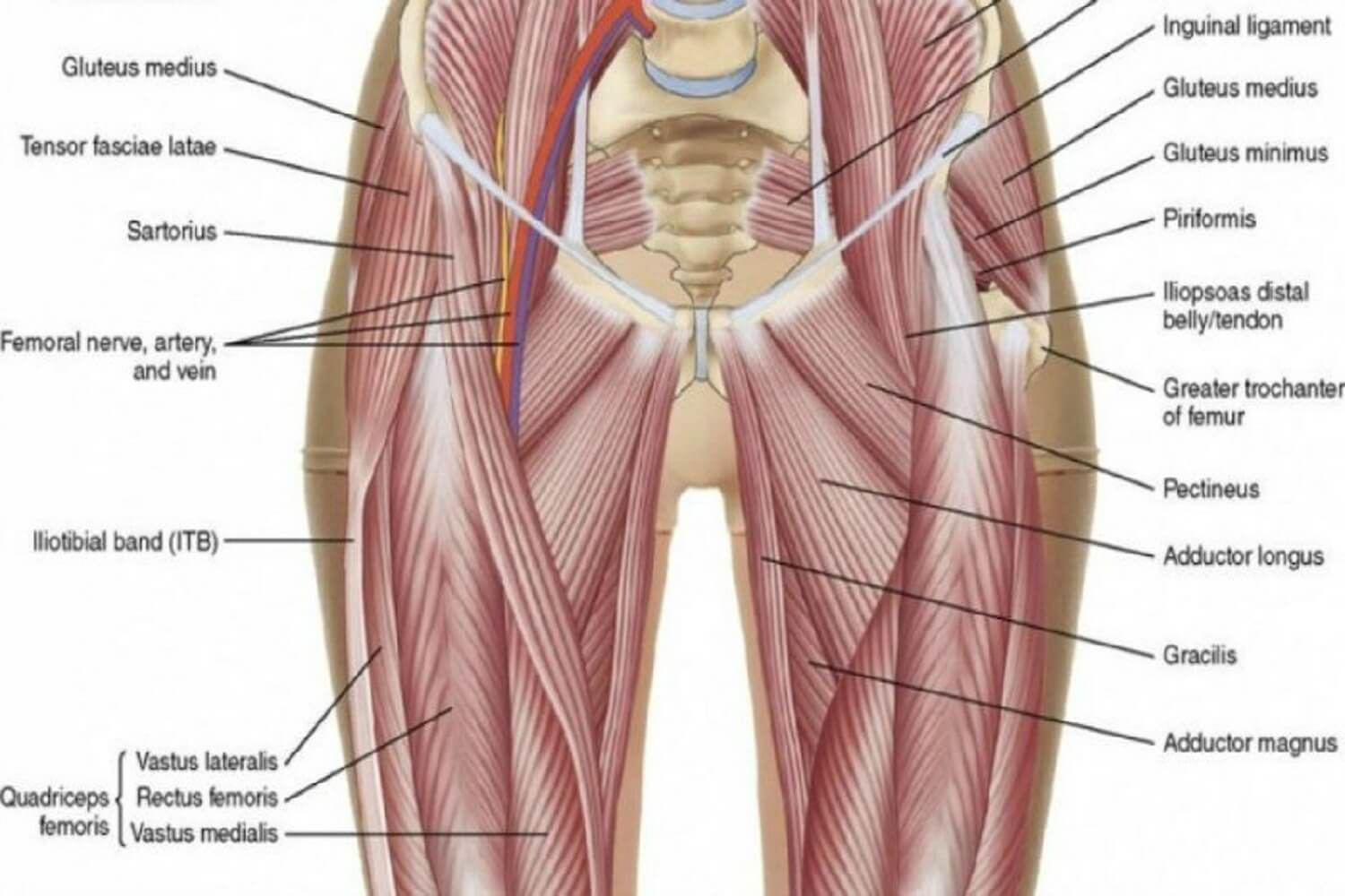groin-pain-physiotherapy
