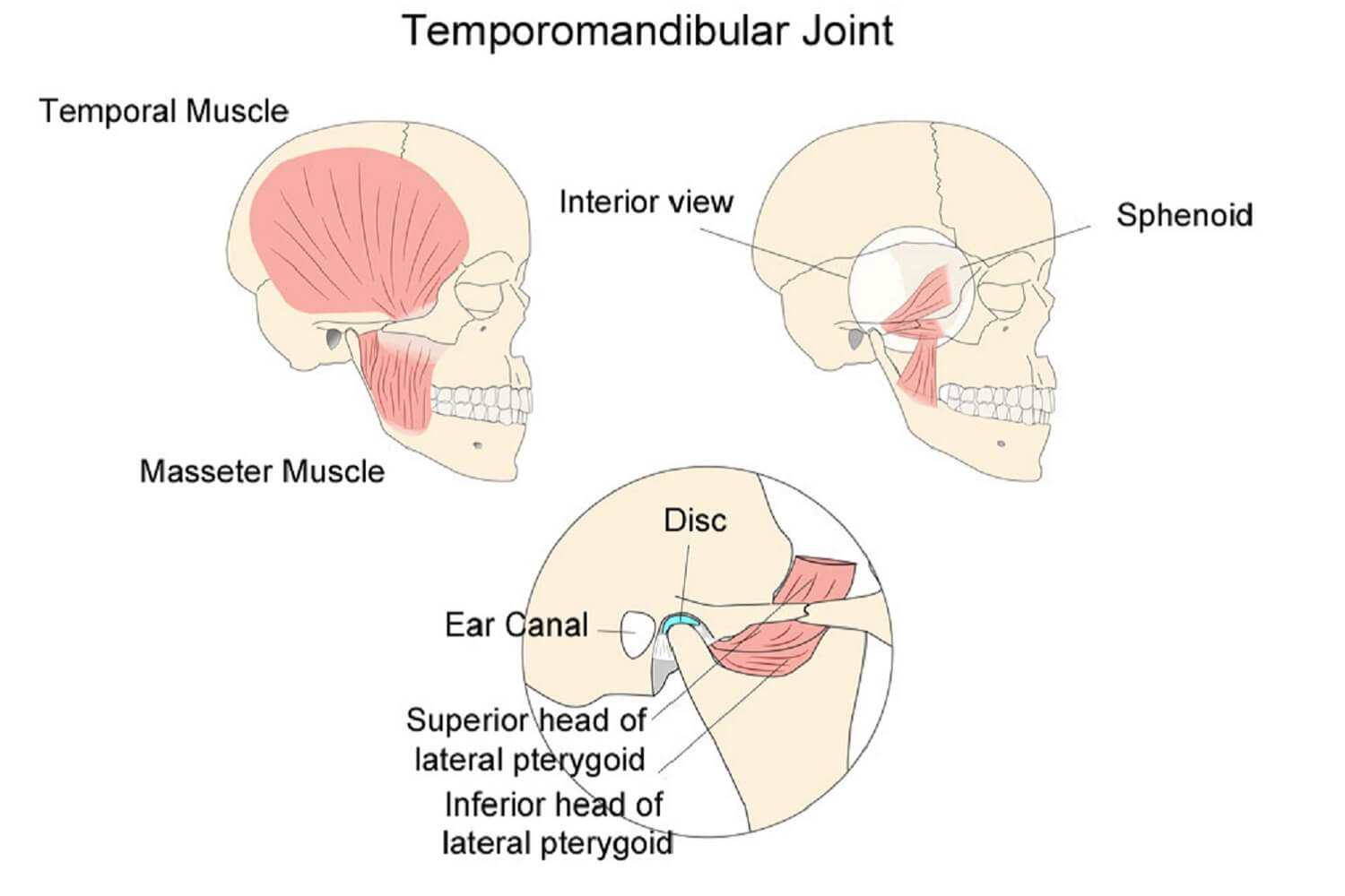 do-you-need-tmj-physiotherapy